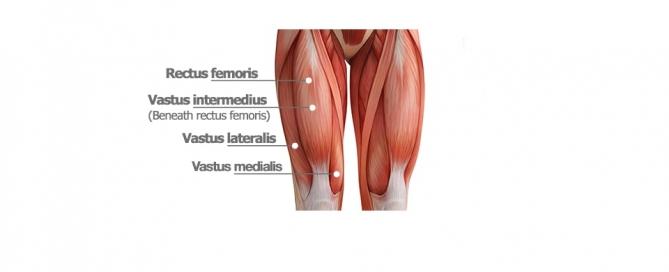 عضلات چهار سر ران