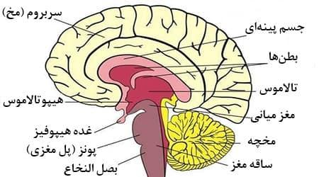 هماهنگی عصب و عضله
